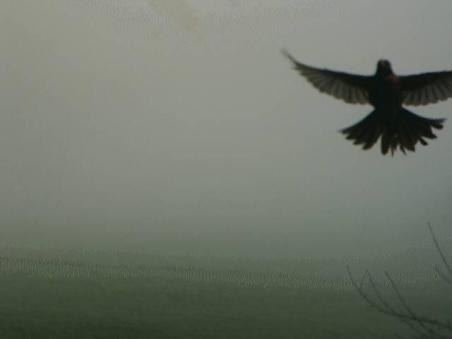 camera image from Charlevoix Michigan